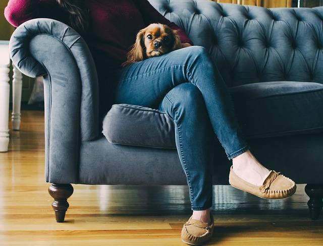 odpočinek se psem na gauči.jpg