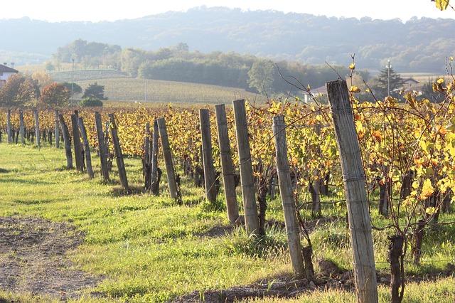 krajina a vinice